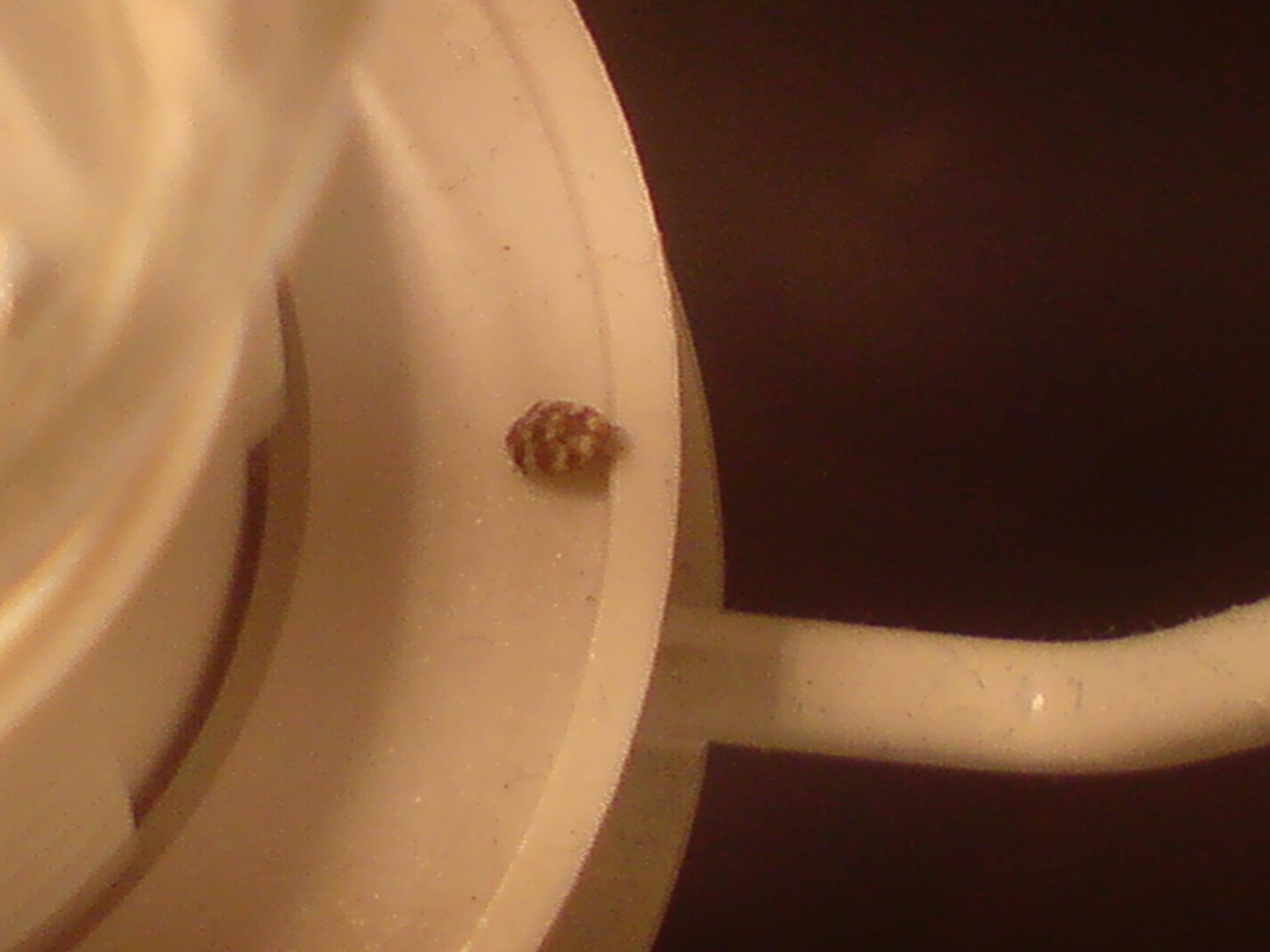Kleine Käfer im Schlafzimmer | ComputerBase Forum